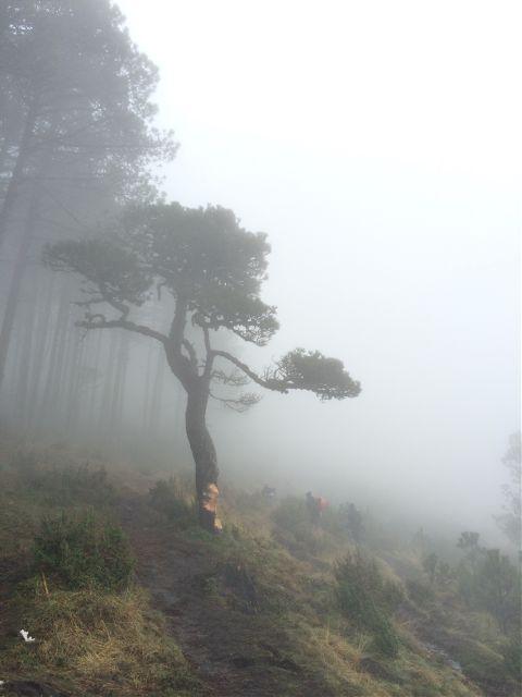 tree guatemala tajumulco fog travel
