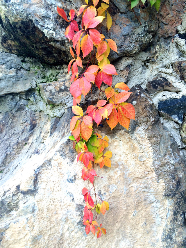 Autumn nicely decorated stones...  #autumn #colorful #leaves #fall
