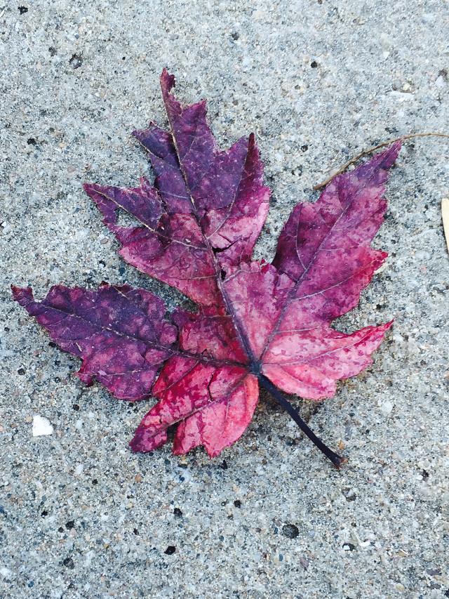 #fal #atumn #leaf #colorsplash