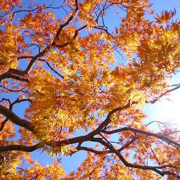 japan hokkaido sapporo autumn coloredleave