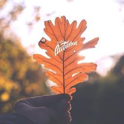 autumn leaf fall color mood