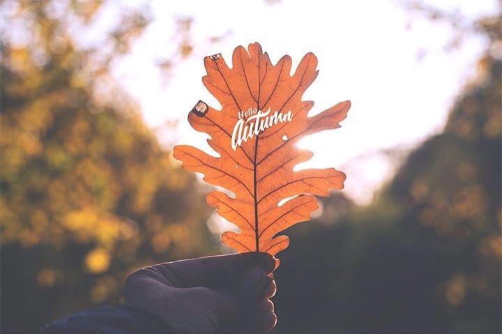 #autumn #leaf #fall #color #mood #warm #season
