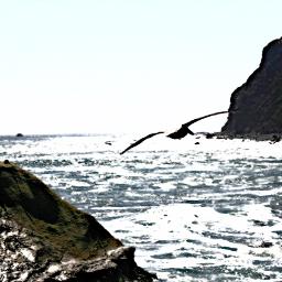 danapoint california beach cliffs seagull
