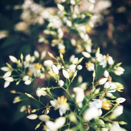 flowers depthoffield canonrebel gardens