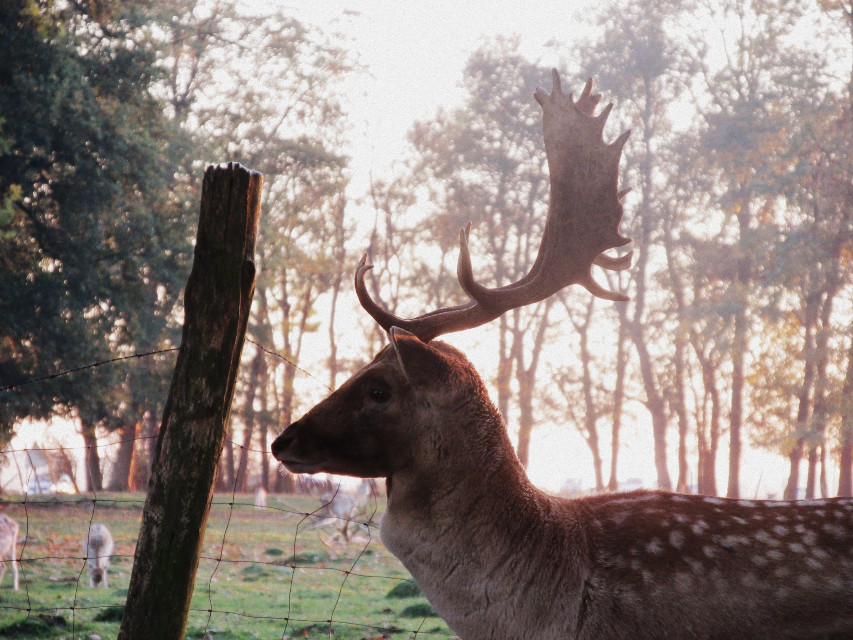 #photo  #photography #picture #photographie #cerf #nature #animal #portrait #deer #WPPzoo#