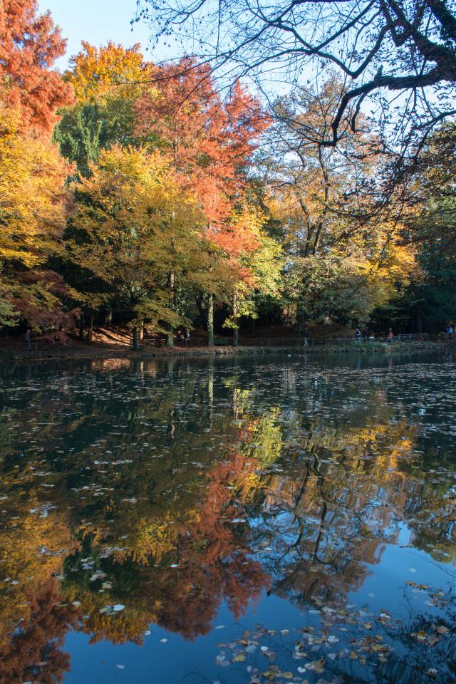Autumn  #colorful #colorsplash #cute #nature #photography #river