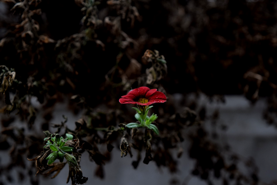 #flower  #power  #emotions #n #nature #red #
