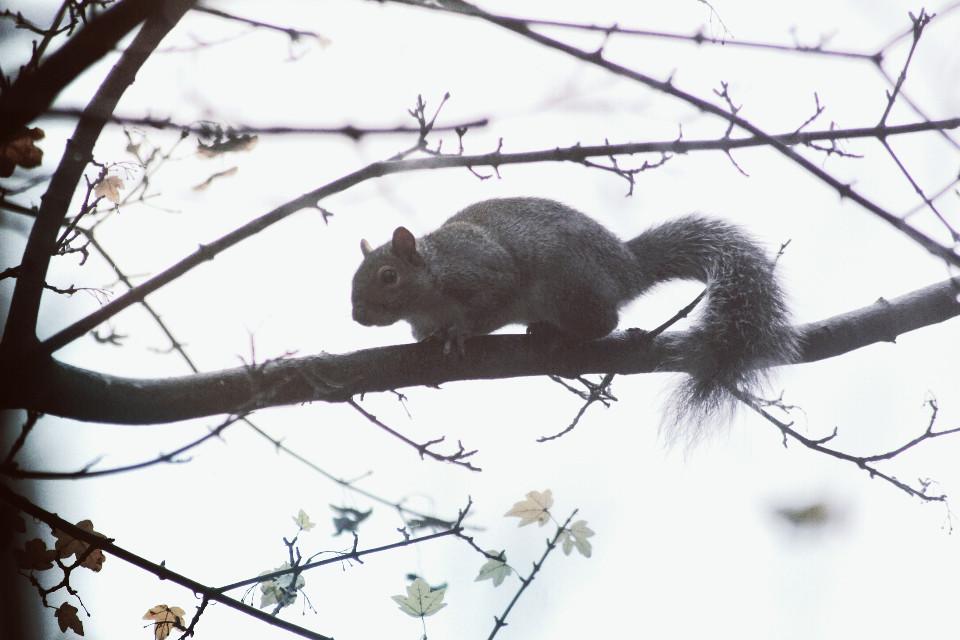 #nature  #squirrel  #petsandanimals #mask #light #seafoam  #autumn #outandabout #photography