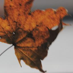 leaf leafs autumn fall tumblr