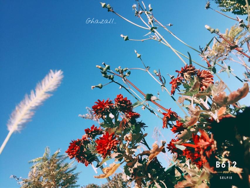 #flower #autumn #sky #sunnyday #closeup