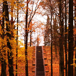 wppfallcolors nature freetoedit interesting fall dpcstairs