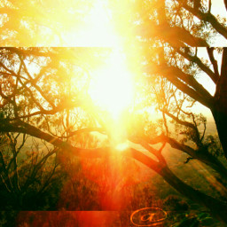 colorful tree sunshines