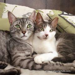 feline cat bff