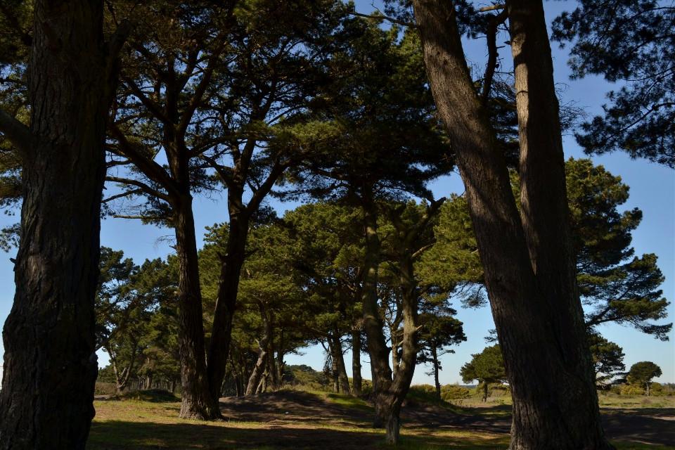 #arboles  #region-del-biobio  #chile  #naturaleza