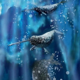 wdpnarwhal sea animal artic drawing