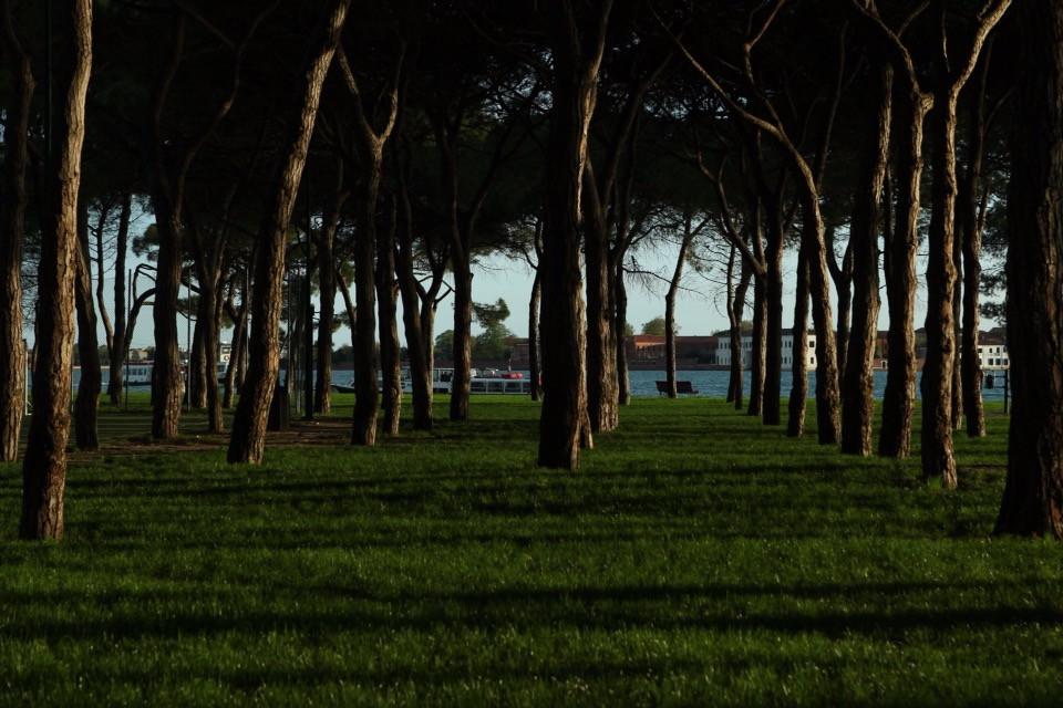 #freetoedit #nature #trees #shadow #beautiful