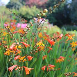 nature flower garden