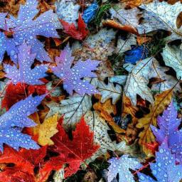 wett leavs colorful