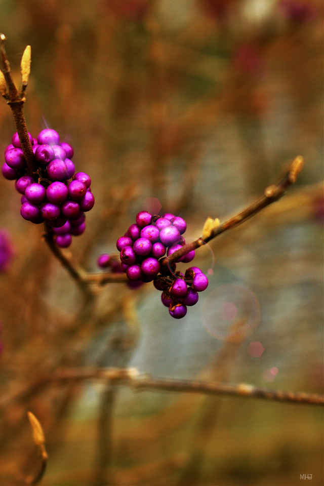EOS 700D   #photography #nature #colorful #macro #winter