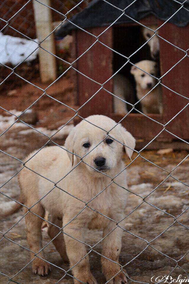 #dogs #cute #familydog #kennel  #photography