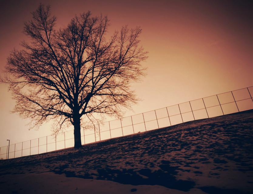 Snowscape  #Snow #tree #nature #sepia #dodgereffect  #horizon  #photography  #artistic  #pretty