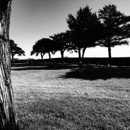 blackandwhite trees bark cemeterybeauty cemetery