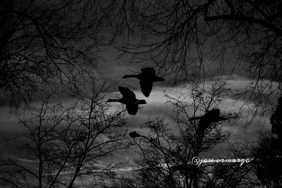 #blackandwhite #nature #photography #winter #love  #birds #emotion #seasons #trees #nikon