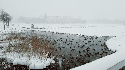 landscape drakes birds winter helsinki