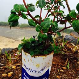 srilanka randomstuff trashy plant noedit