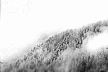 winter trees clouds blackandwhite
