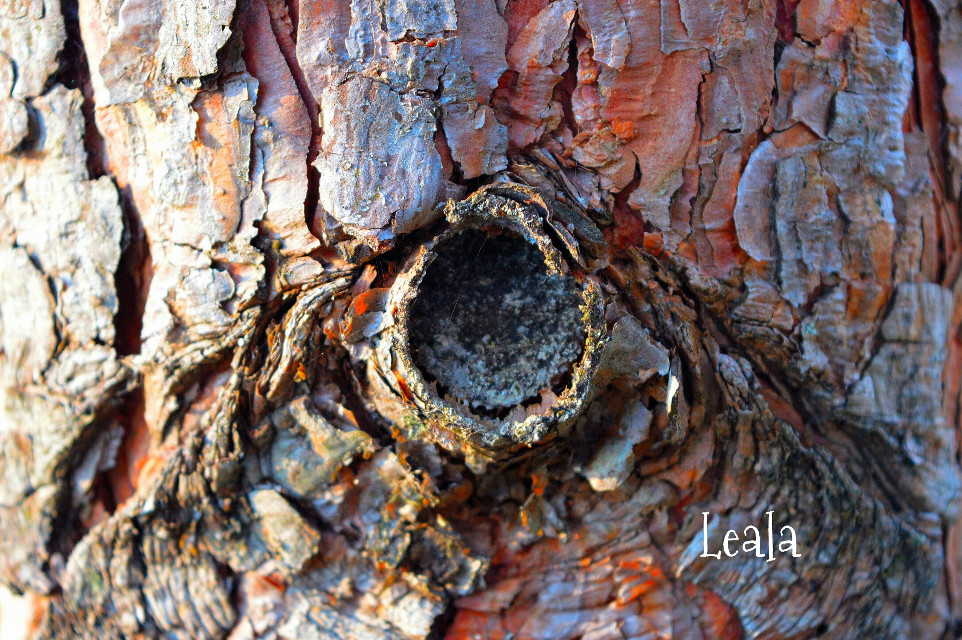 #brown  #autumn  #tree