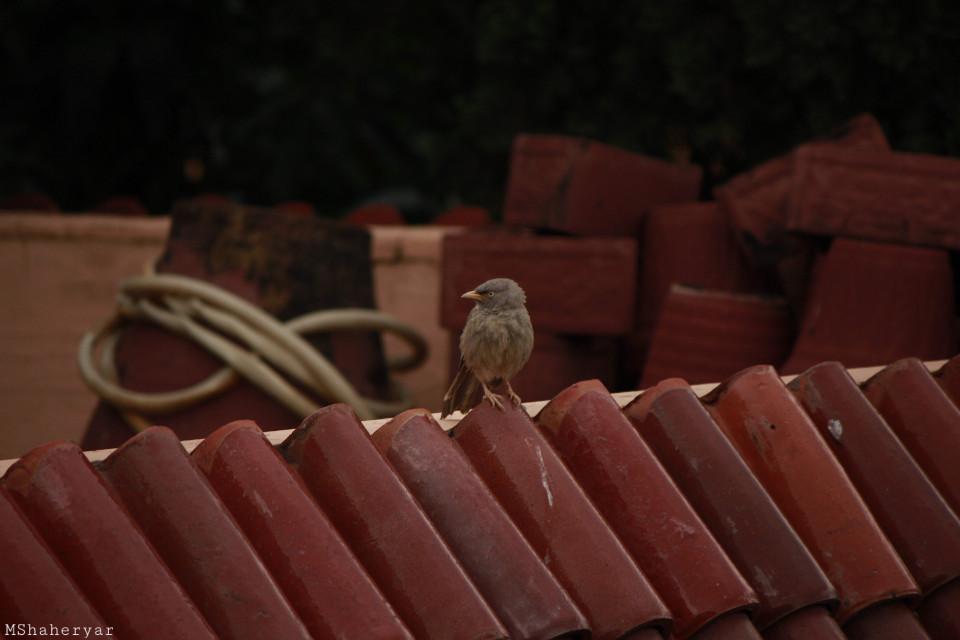 #photography #bird #rooftop