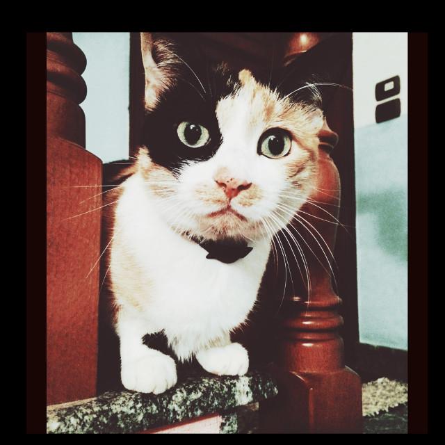 🐈❤️ #interesting#cat#art#photo