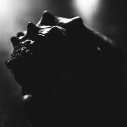 blackandwhite photography shell shadows simple