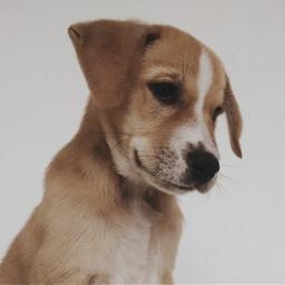keepitsimple dog cute