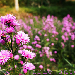wpppurple flower spring bokeh nature