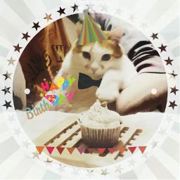 buoncompleanno wappartyanimals 10anni