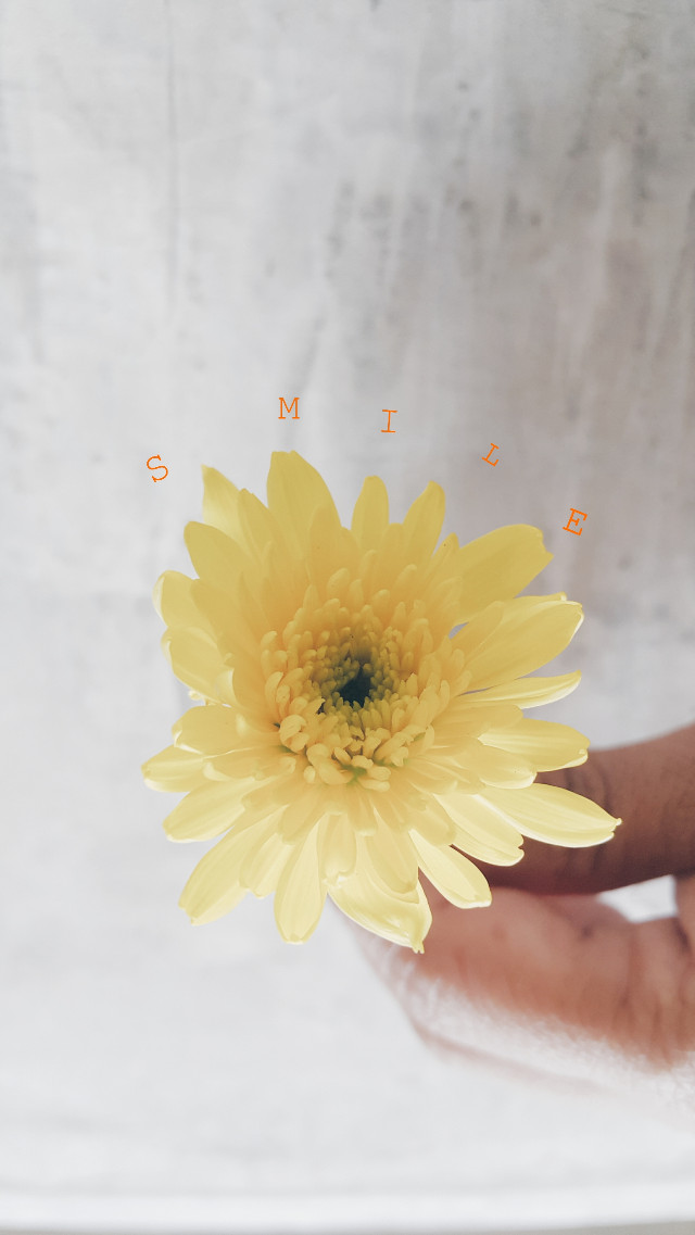 Say Chesse 😀😀😀 #womaninlove #floral #flower #naturalinmyhand #natural #happy #smile #haveaniceday #aday #yellow