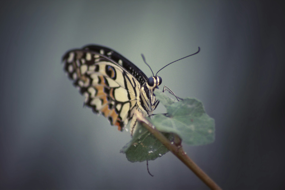 #butterfly  #beautyful #nature #photography #animals #colorsplash