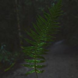 freetoedit travel seattle hiking trails