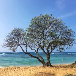 beach sea freetoedit
