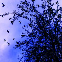 photography nature petsandanimals picsart birds