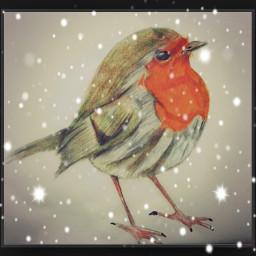 drawing robin birds bird
