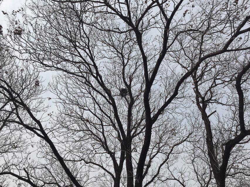 #trees #nature #iphonephotography #birdsnest