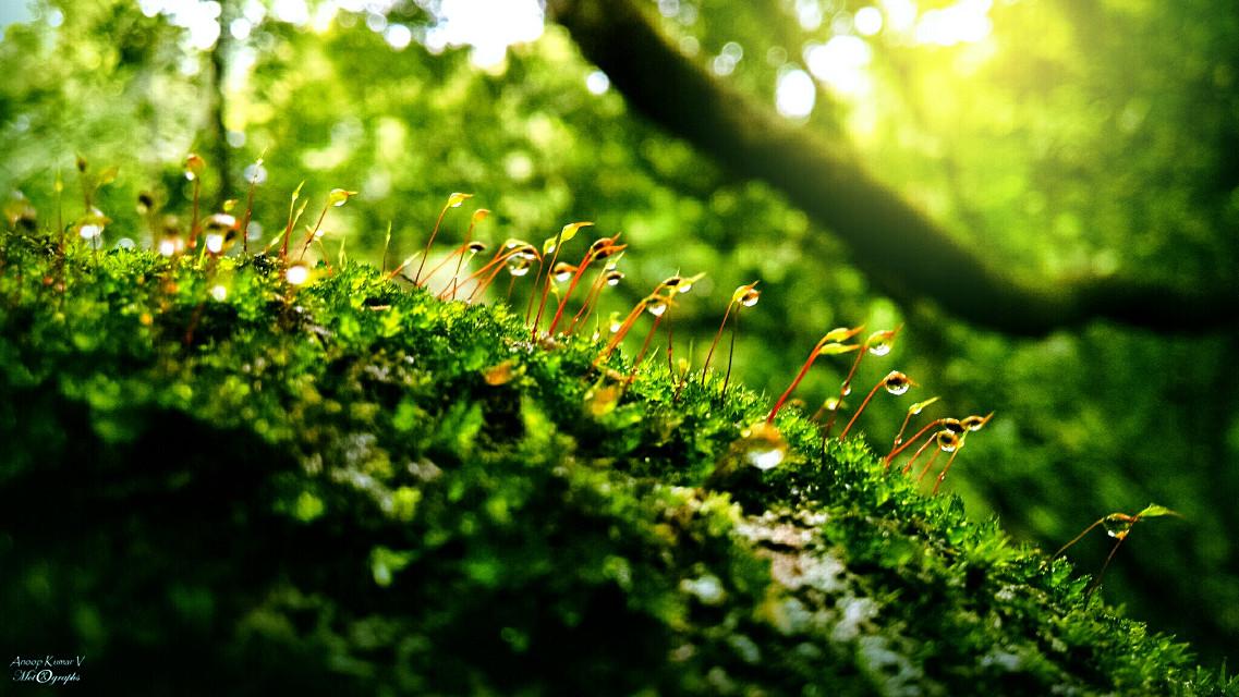 Keep your stands   #cute #colorful #nature #rain #travel #stpatricksday #green #motorola #motox #smartphone