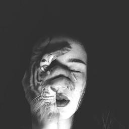 half face bw tiger art