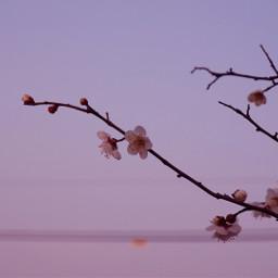 emotions flower nature freetoedit spring