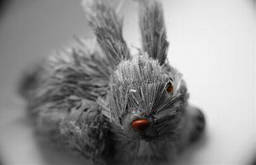 blackandwhite photography bunny