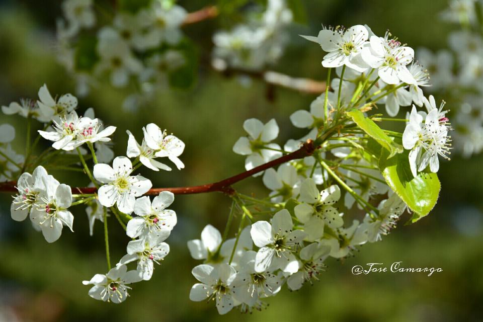 #spring #summer #seasons #nikon #flower #colorful #nature #love #photography  #blossom  #leaf