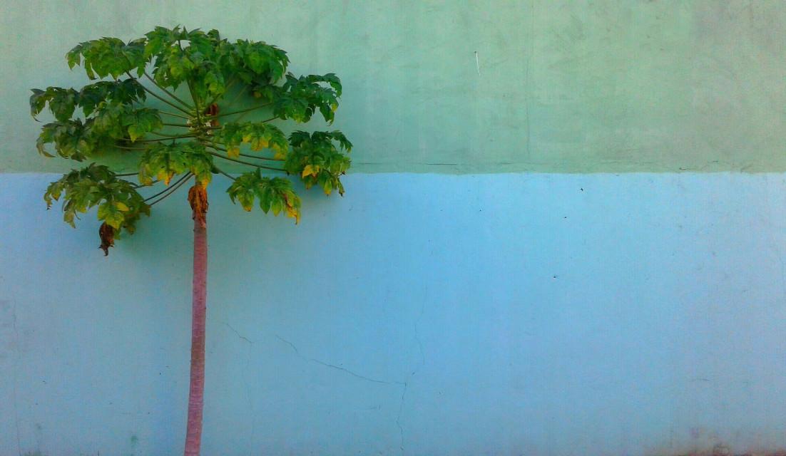 #trees #minimal #nature #colorful #freetoedit  #photography